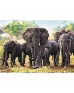 Elephants puslespil 1000 brikker